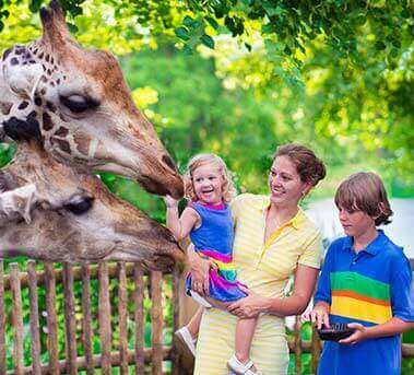 San Diego Zoo Package In Best Western Lamplighter Inn