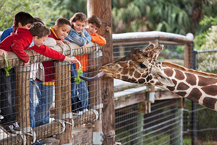San Diego Zoo at California